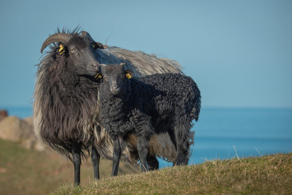 Finding the Black Sheep
